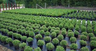 Planteskoler